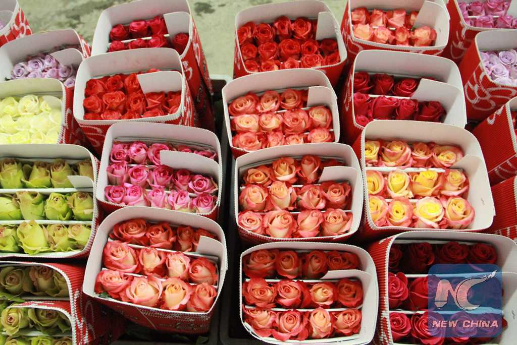 (130703) -- CAYAMBE, July 3, 2013 (Xinhua) -- Packed roses are ready to be transported to the airport in Flor Aroma Rose Garden in Cayambe province, Ecuador, July 2, 2013. Ecuador is one of the main rose exporters in the world. (Xinhua/Liang Junqian) (dzl)