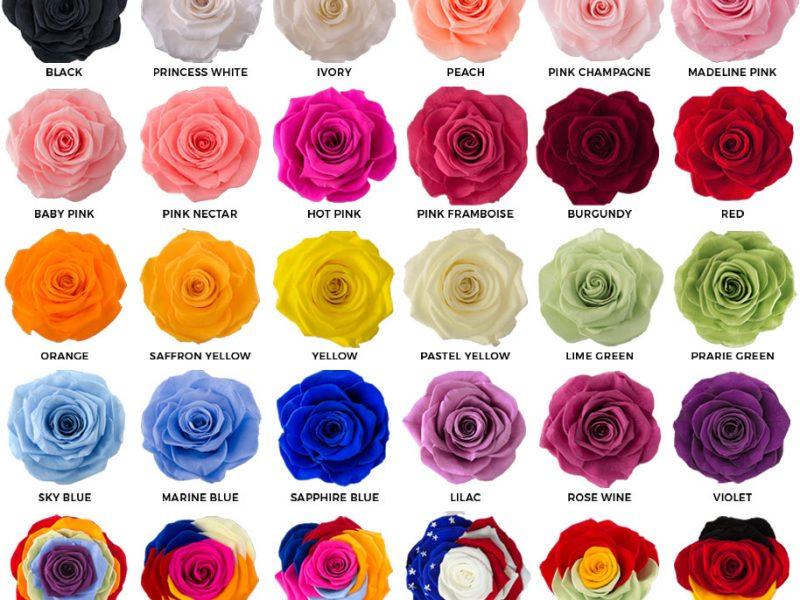 variety-preserved-roses